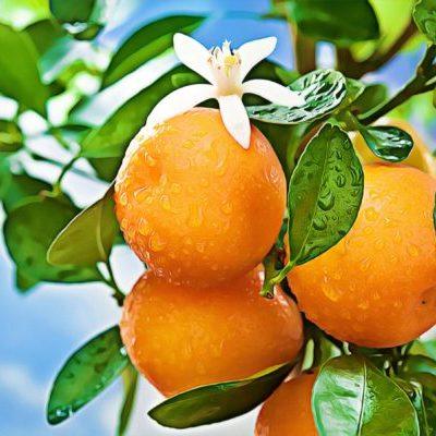 jardin orange en fleurs 3